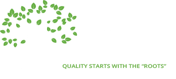 Caring for Your New Landscaping Shrubs